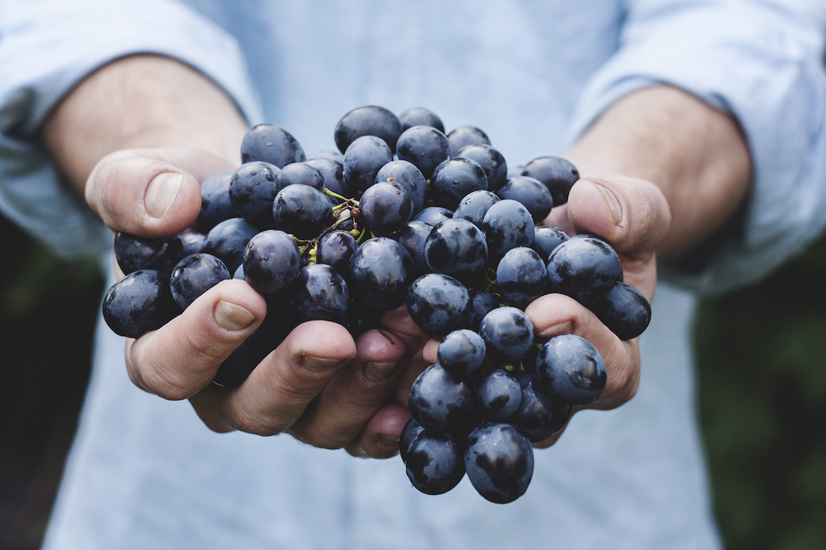 Guest Post by Stephanie Dunne: If You Believe It, You Can Use Food to Change Your Life   happyliving.com - image via Unsplash